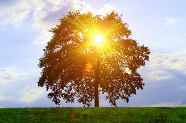 Sonne scheint durch einen Baum